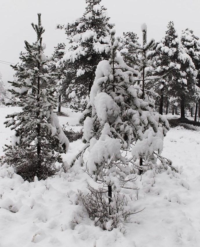 011219 Winter wonderland guro storlis fotografier_690x851.jpg