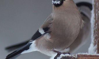 050120 fugler_ved_hytta