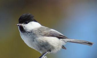 130220 fugler ved hytta