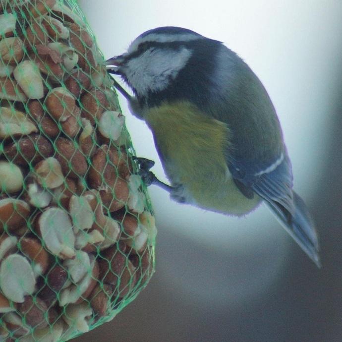 130220 fugler ved hytta 2.jpg