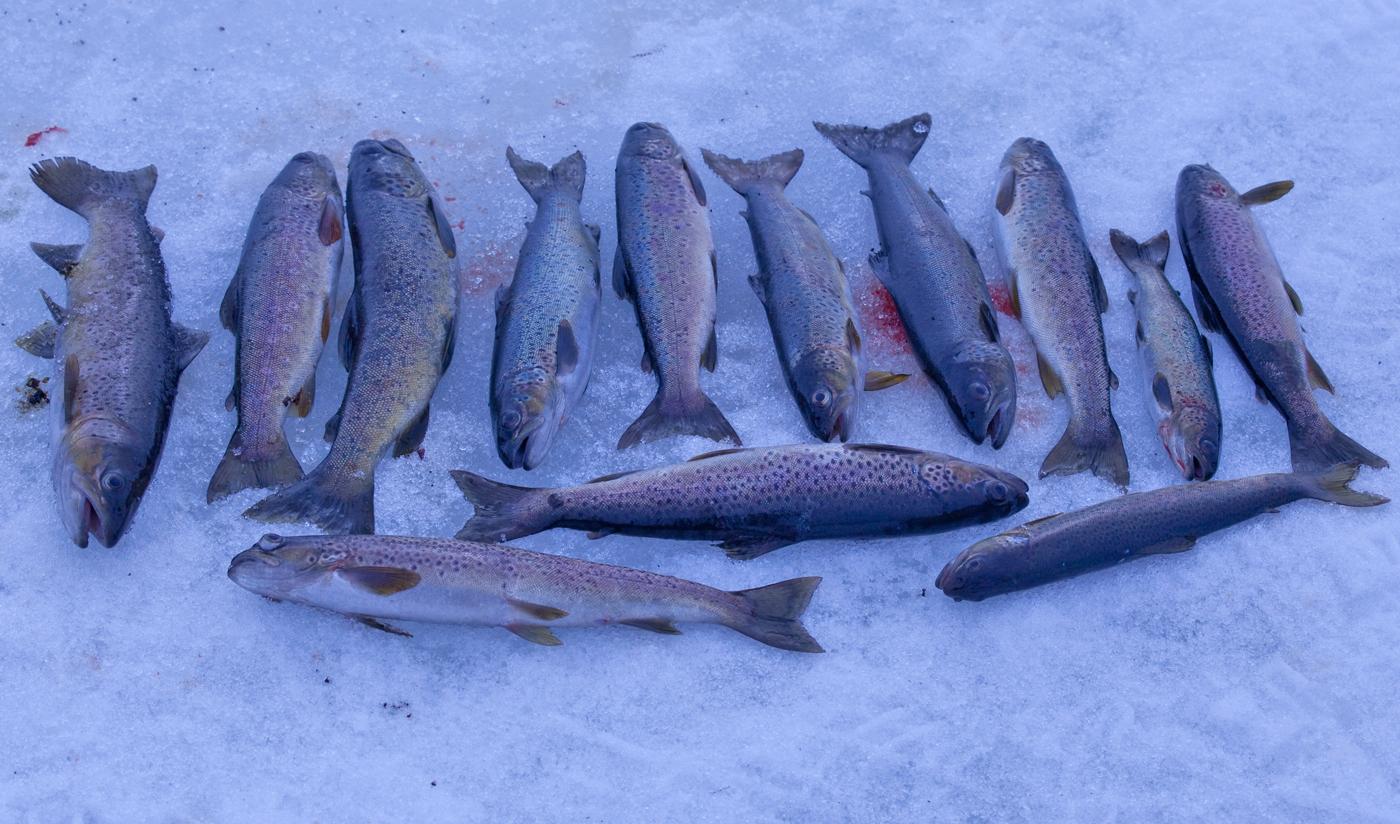 200310i--fisker.jpg