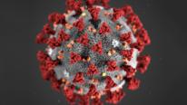 koronavirus-tema21