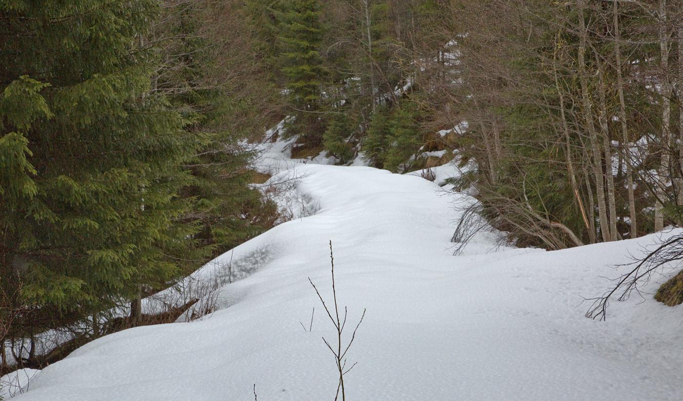 200517d-skogsvei.jpg