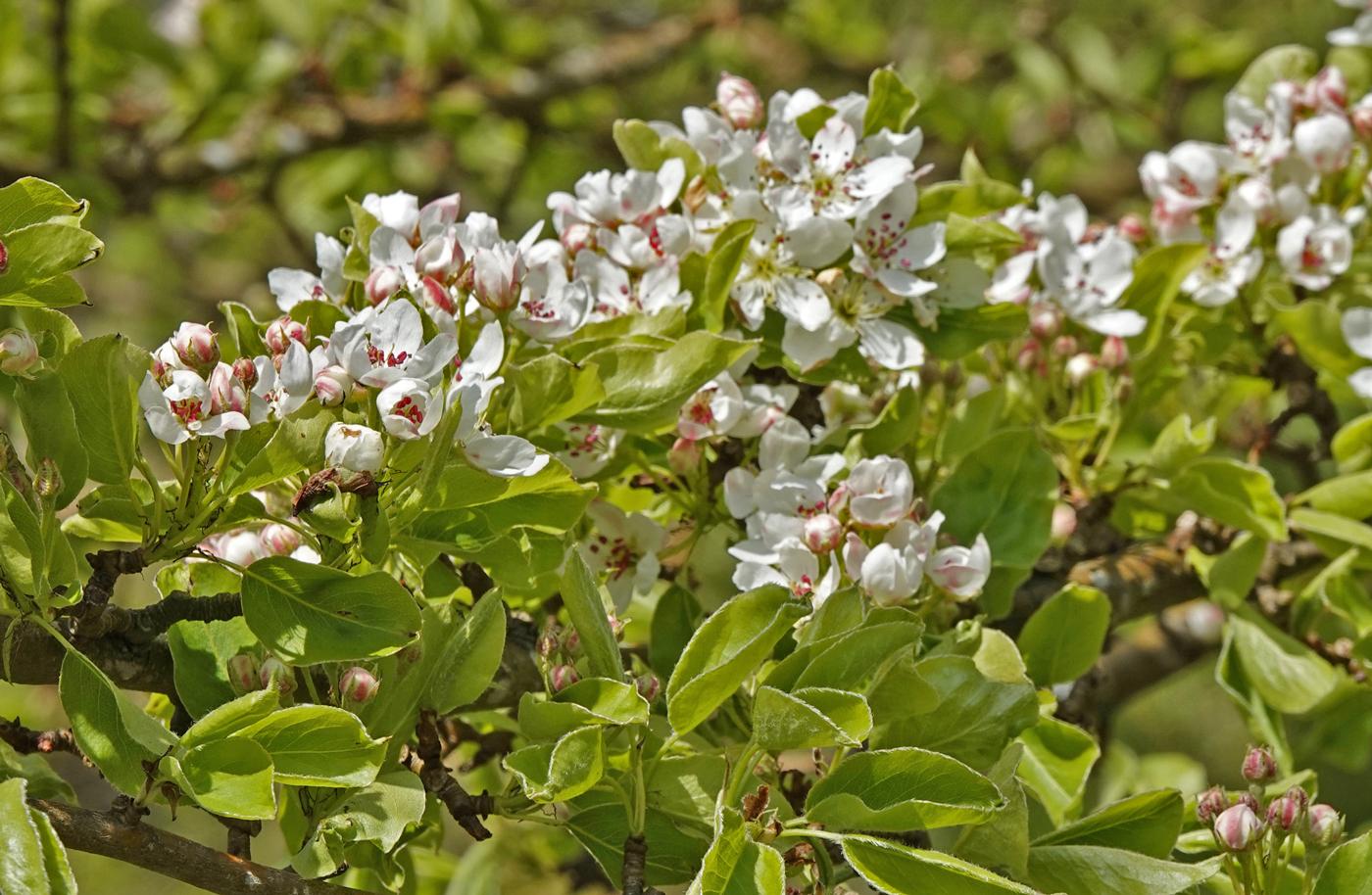 200522l-blomtring.jpg