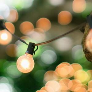 Lyslenke og trær