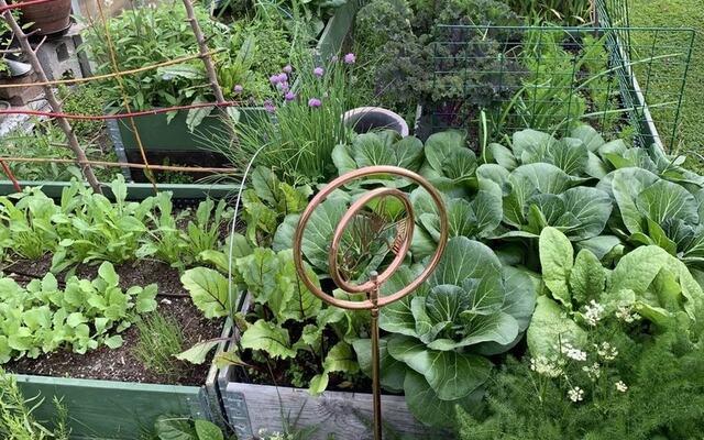 bilde av vekster i hage