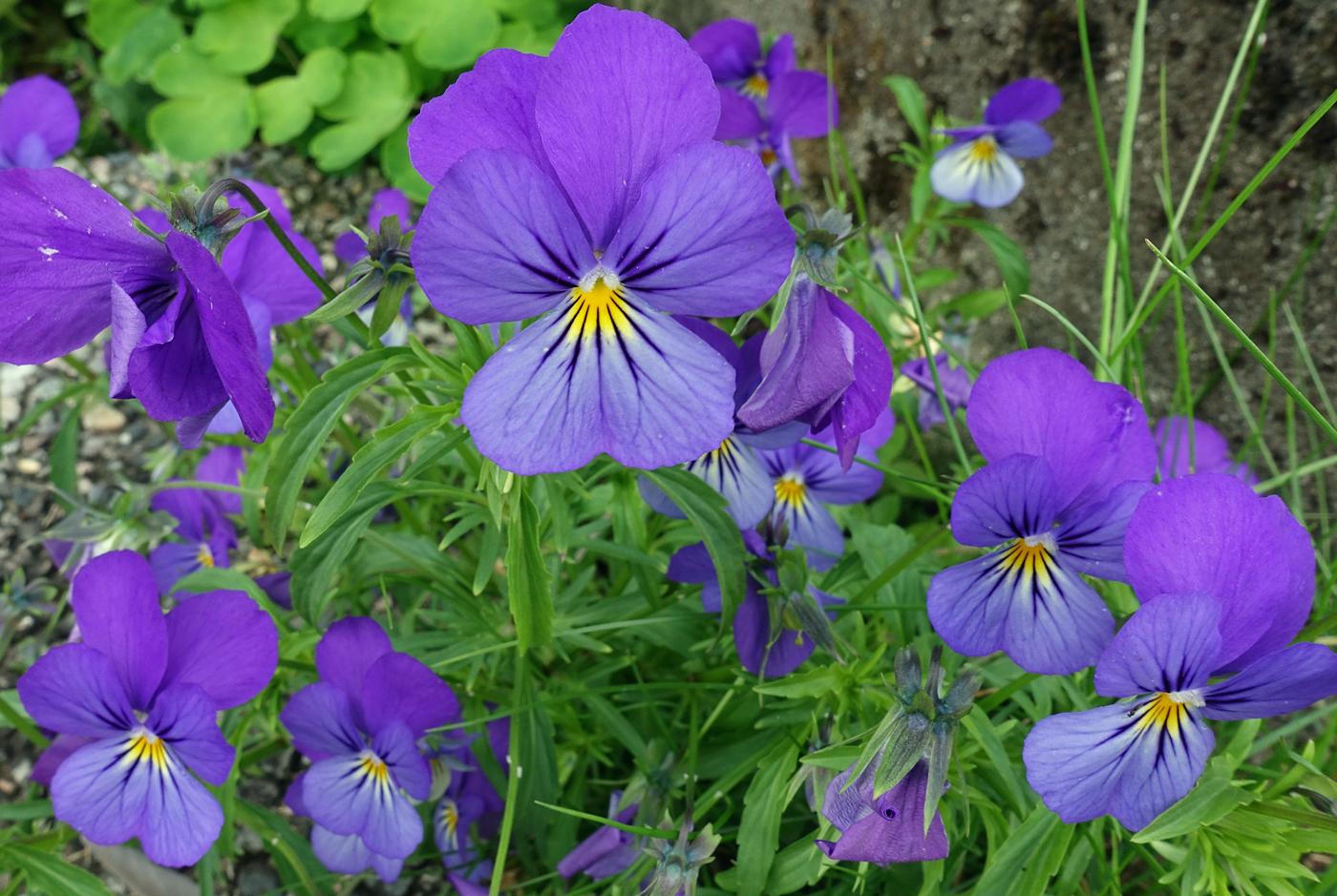 200713s-blomst.jpg