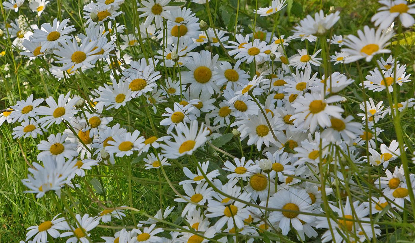 200716f-blomster.jpg