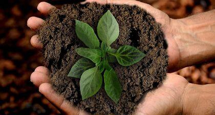 blader i jord