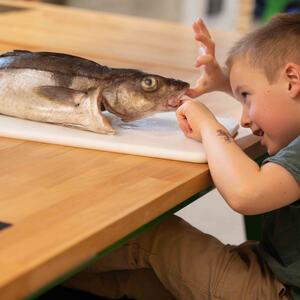 Barnehagekurs ved Geitmyra Ringsaker matkultursenter for barn
