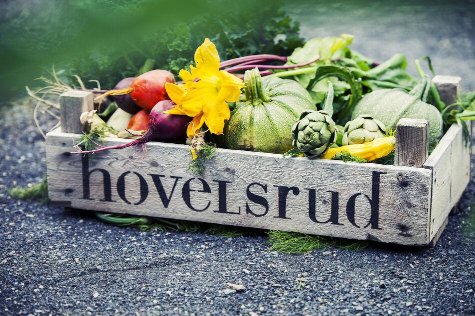 Grønnsaker fra kjøkkenhagen på Hovelsrud på Helgøya - FOTO Rakel Berg