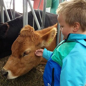 Bilde av barn med kalv