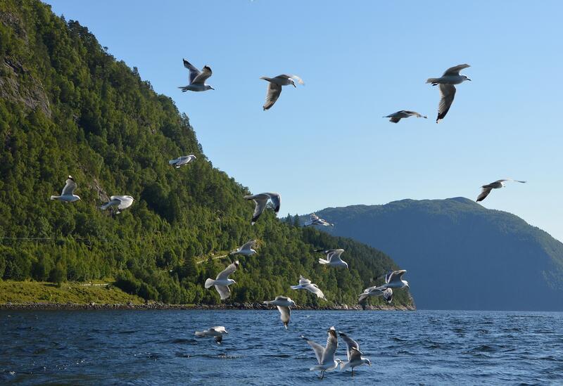 Mot Bøkleppen: Flott fiskeområde med mykje kulturhistorie langs Oralandet. (Foto. Bernt G. Bøe)