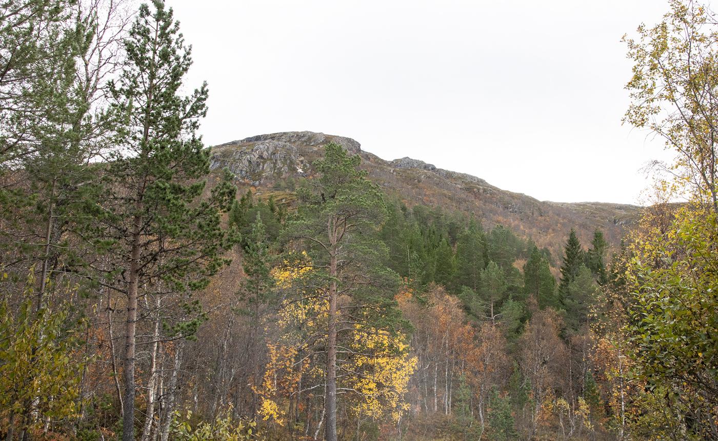 211001g-skog