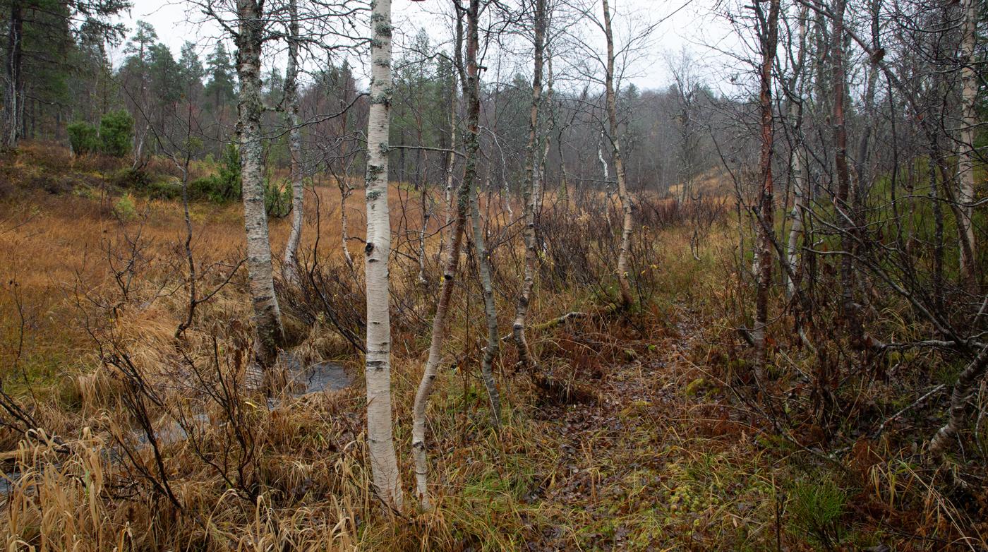 211011d-skog